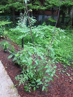 家庭菜園_d0133485_920234.jpg