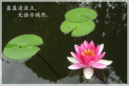 b0101387_1535389.jpg