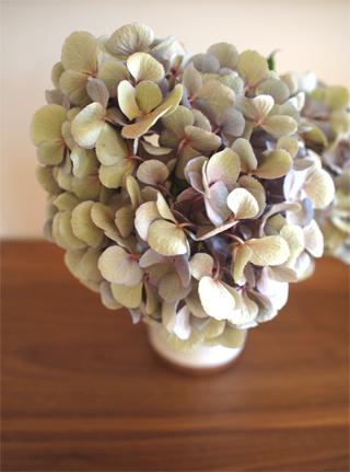 夏に愉しむ、花々。_d0174704_13551260.jpg