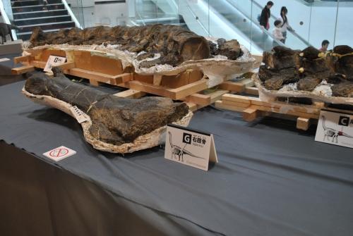 めちゃめちゃ貴重な体験!恐竜化石をクリーニングしてみません?_f0229508_826327.jpg