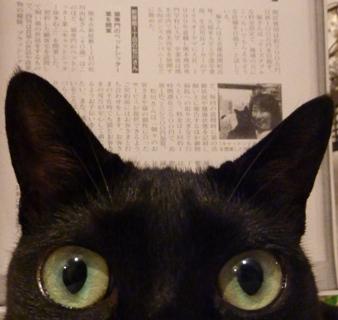くまもと経済2010年7月号p214掲載猫 のぇる編。_a0143140_21405329.jpg