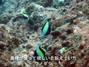 3回目の体験ダイビングはプーケットで!!_f0144385_21151062.jpg