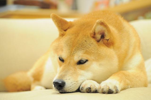 おやすみ、かぼちゃん!_a0126590_5383694.jpg