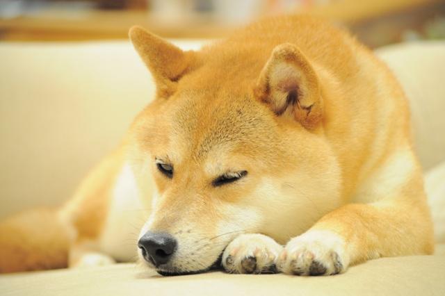 おやすみ、かぼちゃん!_a0126590_5385866.jpg