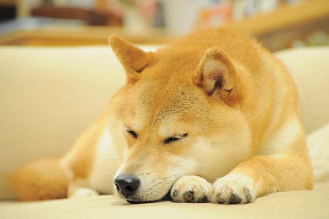 おやすみ、かぼちゃん!_a0126590_5391832.jpg