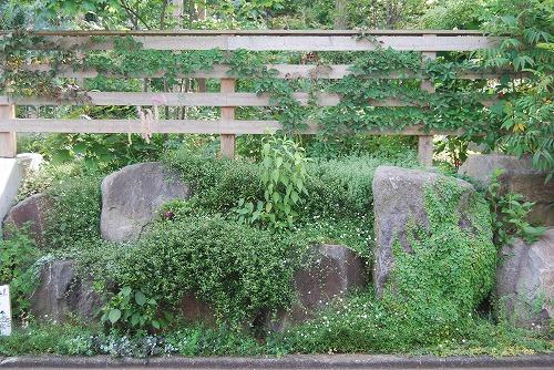 7月の庭…_c0124100_22434123.jpg
