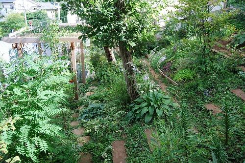 7月の庭…_c0124100_22455276.jpg