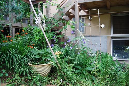 7月の庭…_c0124100_22462944.jpg