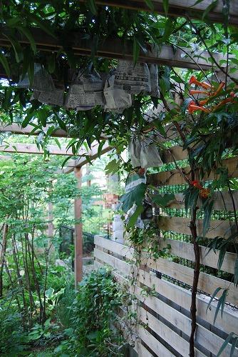 7月の庭…_c0124100_22464381.jpg