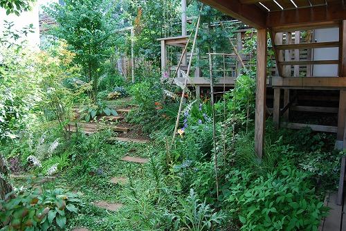 7月の庭…_c0124100_2246954.jpg