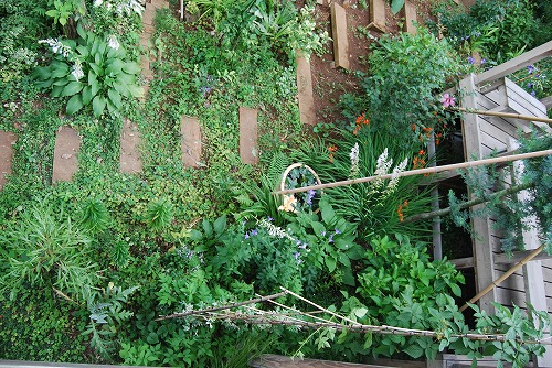 7月の庭…_c0124100_2247124.jpg