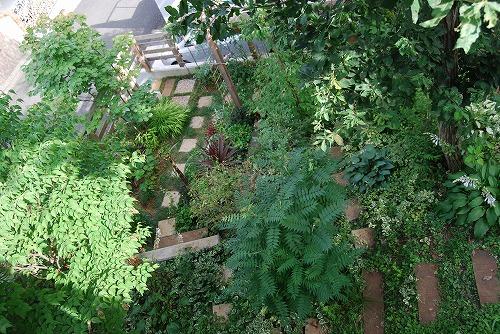 7月の庭…_c0124100_22472137.jpg