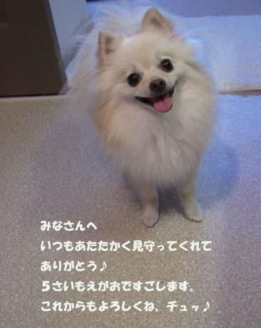 c0172106_20125465.jpg