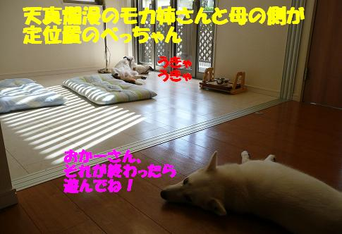 f0121712_1602939.jpg