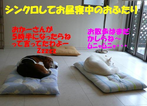 f0121712_16038100.jpg