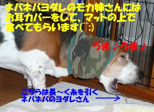 f0121712_1614530.jpg