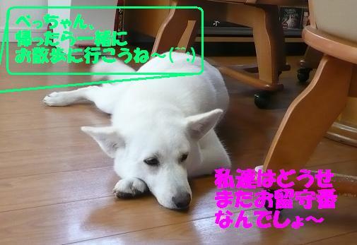 f0121712_164225.jpg