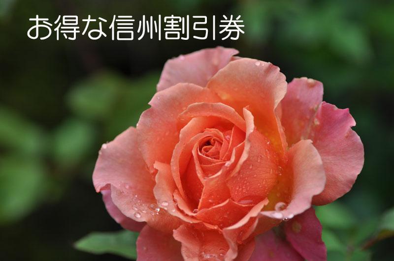 d0109415_10461844.jpg