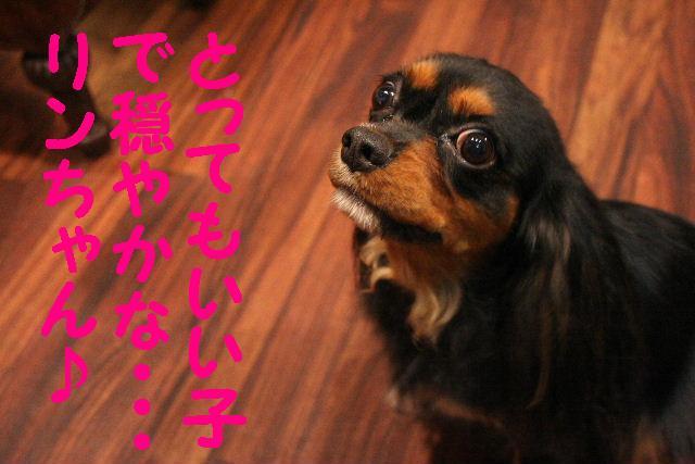 いっぱいあっぷ~♪_b0130018_204753.jpg