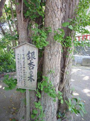織幡神社(3)祭神・壱岐真根子の悲劇_c0222861_2149751.jpg