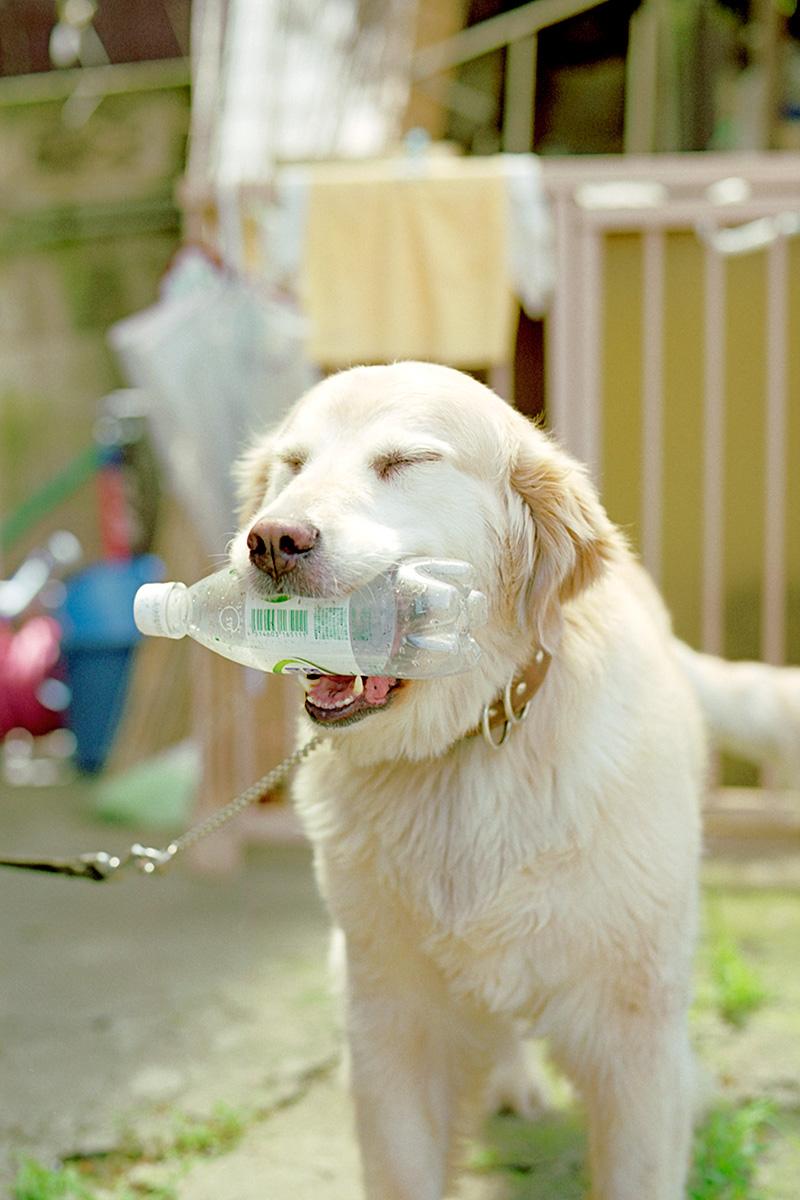 サイダー犬_f0121181_0333253.jpg