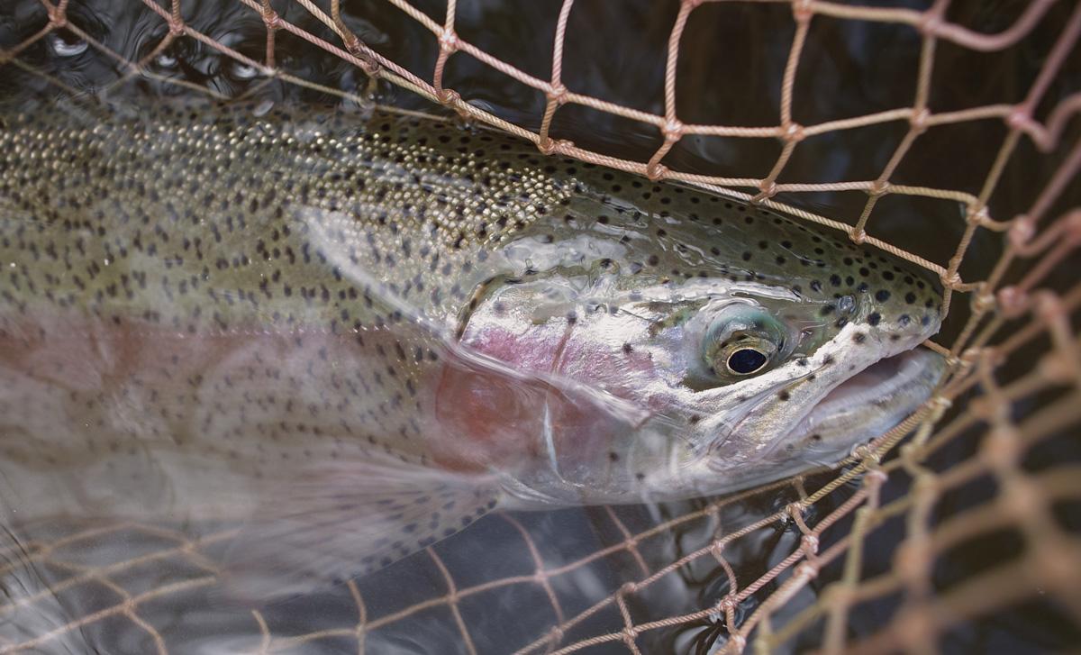 Big trout day_c0095801_17352367.jpg
