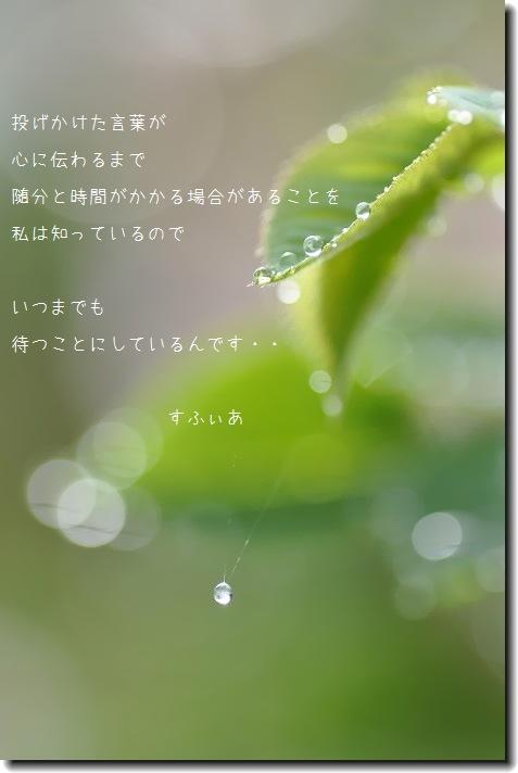 b0152416_14164356.jpg