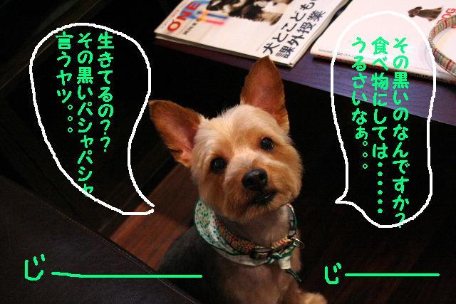 b0130018_20361357.jpg