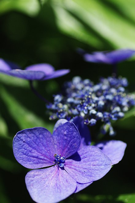 PENTAX BLUE_e0171336_16421727.jpg