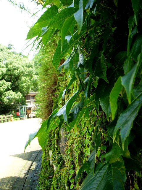 夏の小鹿田焼き_c0156749_1884057.jpg
