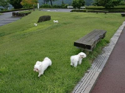 カリファミリー、マミちゃんのお山と軽井沢へ(^^)/_b0001465_1328231.jpg