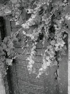 f0100480_19525523.jpg