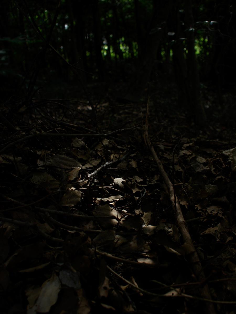 森の奥_f0121181_071747.jpg