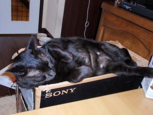 フクちゃん、あらあら、人間みたいな格好で寝ていますね。_f0106028_12134847.jpg
