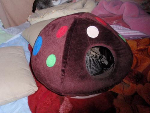 フクちゃん、あらあら、人間みたいな格好で寝ていますね。_f0106028_127079.jpg