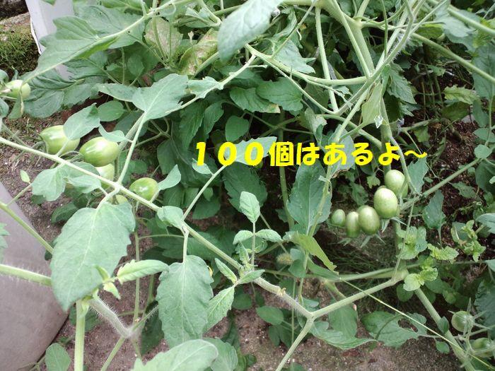 b0127531_9481047.jpg