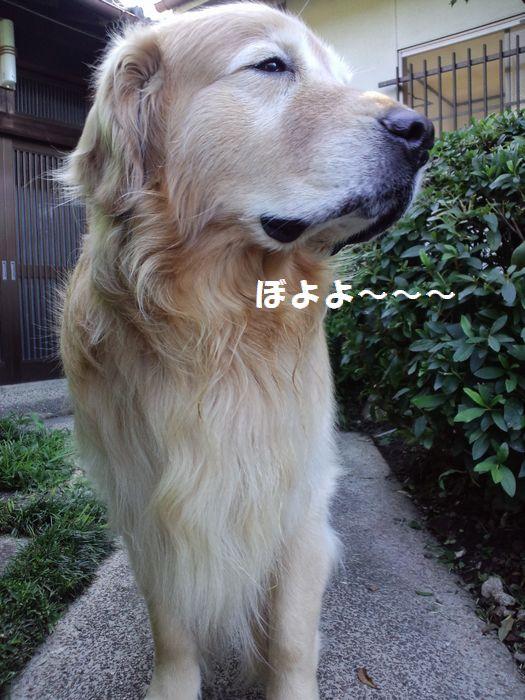 b0127531_9535134.jpg