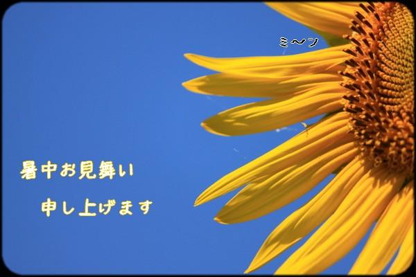 b0173833_18442689.jpg