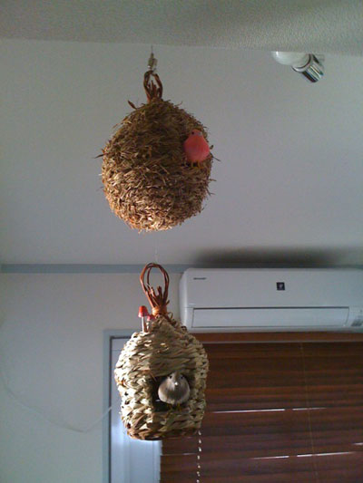 連結鳥の巣。_d0062651_12261211.jpg