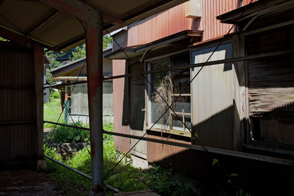 2010/07/19 真夏の布田道_b0171364_11155598.jpg