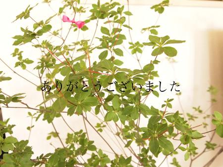f0091194_22193482.jpg