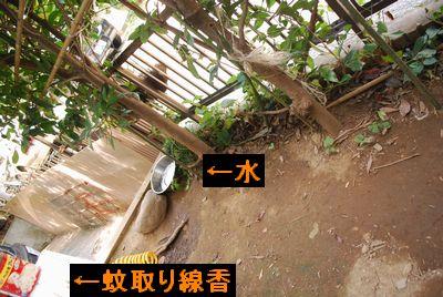 f0109202_1229017.jpg
