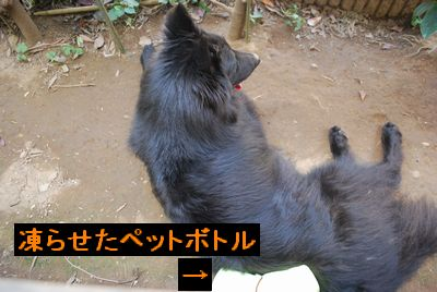 f0109202_1229132.jpg