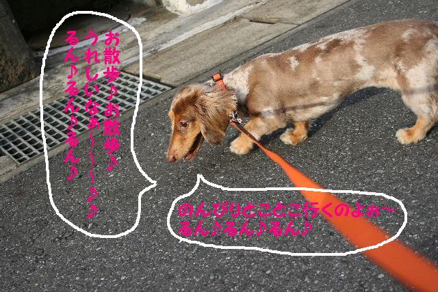 お泊りのナナちゃん♪_b0130018_19104140.jpg