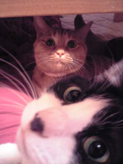 お誕生日猫 空13歳編。_a0143140_20133624.jpg