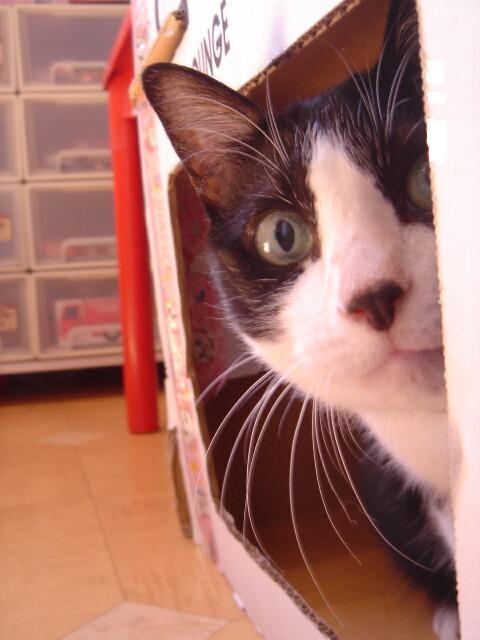 お誕生日猫 空13歳編。_a0143140_210685.jpg