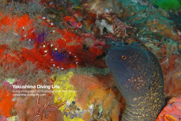 漁礁が遠い、、、。_b0186442_21563243.jpg