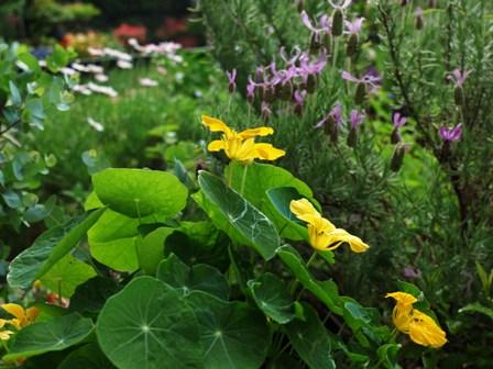 梅雨入り前の良い季節_b0190560_794879.jpg