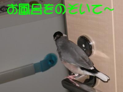 b0158061_22365750.jpg