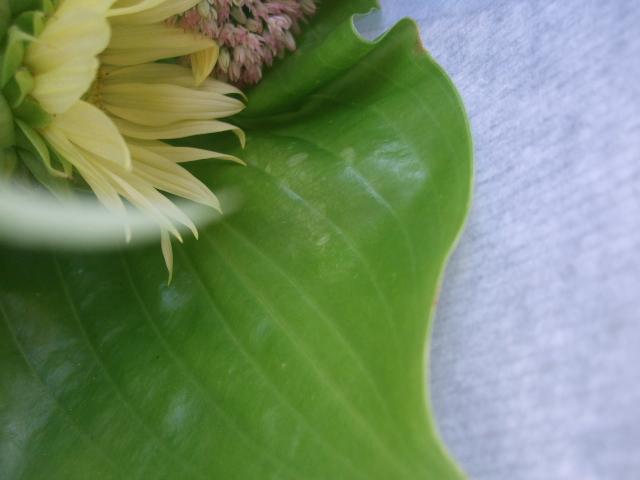 オークリーフ(ストロベリーフィールドの花束)_f0049672_1154041.jpg